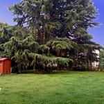 thumb_kh-garden2.jpg